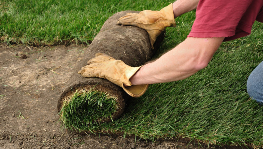 Image result for sod lawn